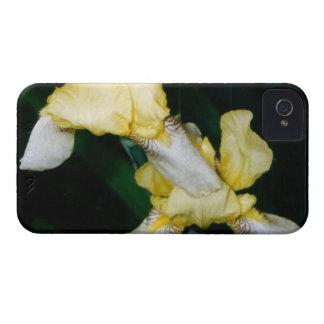 Yellow Iris iPhone 4 Case-Mate Cases