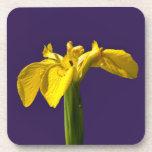 Yellow Iris Drink Coaster
