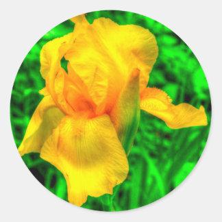 Yellow Iris Floral Garden HDR Photo Sticker