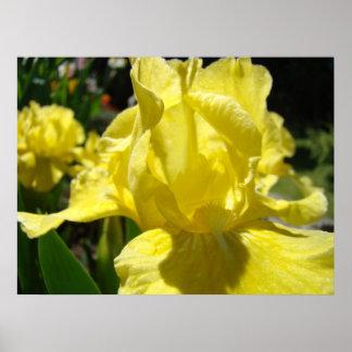 Yellow Iris Flower Healing Touch Artwork Health Poster
