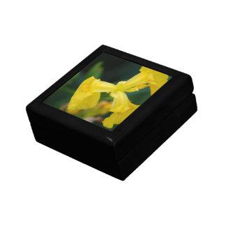 Yellow Iris Flowers  Gift Box