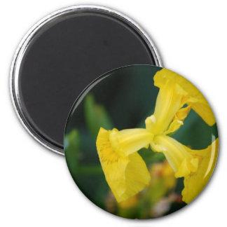 Yellow Iris Flowers Magnet Magnets
