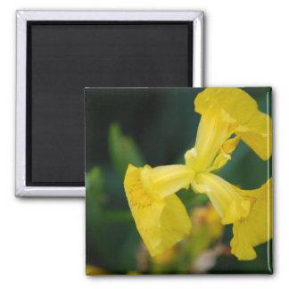 Yellow Iris Flowers Magnet Refrigerator Magnet