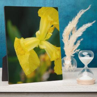 Yellow Iris Flowers  Plaque