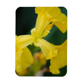 Yellow Iris Flowers  Premium Magnet Rectangle Magnets