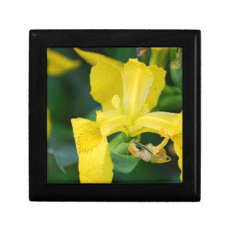 Yellow Iris  Gift Box