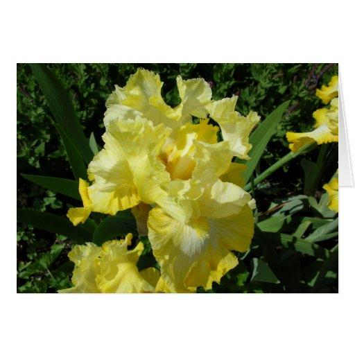 Yellow Iris Greeting Card