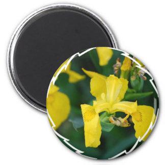 Yellow Iris Magnet Refrigerator Magnet