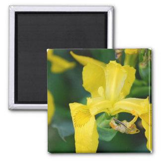 Yellow Iris Magnet Refrigerator Magnets