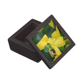 Yellow Iris Premium Gift Box