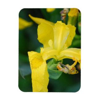 Yellow Iris  Premium Magnet Magnet