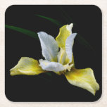 Yellow Iris Square Paper Coaster