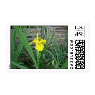 Yellow Iris Stamp