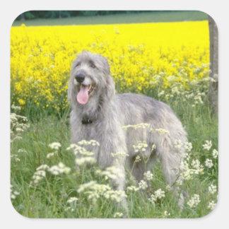 yellow Irish wolfhound flowers Square Sticker