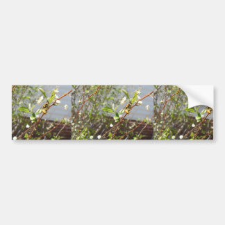 Yellow Jacket And Aphids On Flowery White Bush Bumper Stickers