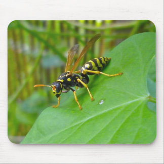 Yellow Jacket Mousepad
