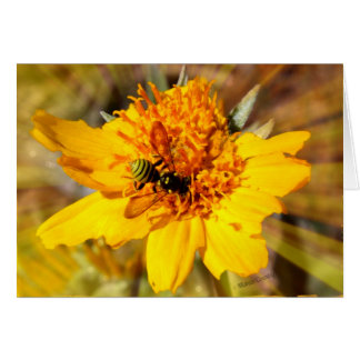 Yellow Jacket on Yellow Flower Card