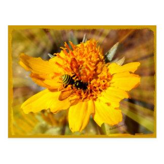 Yellow Jacket on Yellow Flower Postcard