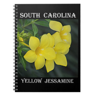 South Carolina State Flower Flowers Healthy