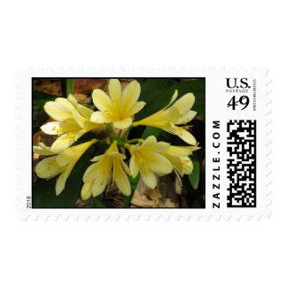 Yellow Kafir Lily Postage Stamp