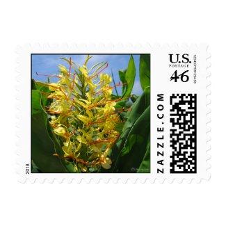 Yellow Kahili Ginger Small Postal Square stamp