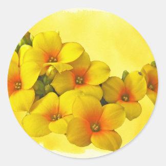 Yellow Kalanchoe - Succulent Sunshine Classic Round Sticker