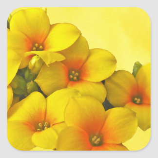 Yellow Kalanchoe - Succulent Sunshine Square Sticker