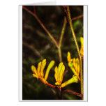 Yellow Kangaroo Paw Card