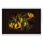 Yellow Kangaroo Paw flower Cards