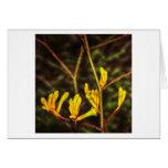 yellow kangaroo paw flower greeting cards