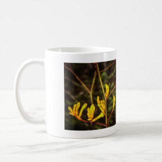 yellow kangaroo paw flower mug