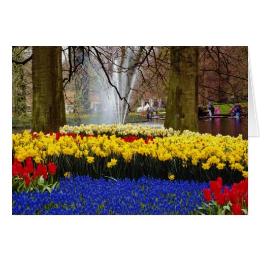 yellow Keukenhof gardens, Amsterdam, Netherlands f Greeting Card
