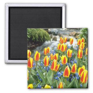 yellow Keukenhof Gardens, Holland flowers Magnet