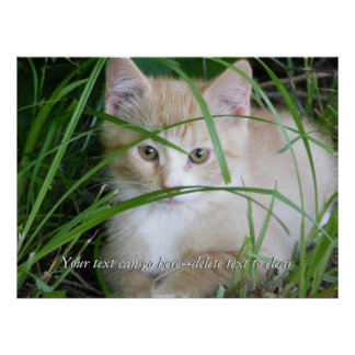 Yellow Kitten in Tall Grass Poster