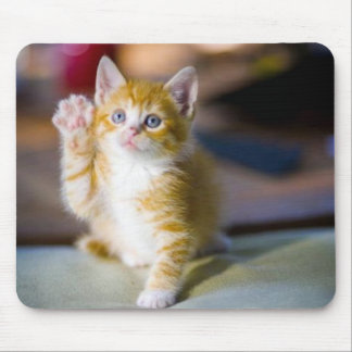 yellow kitten with his paw held up waving mouse pad