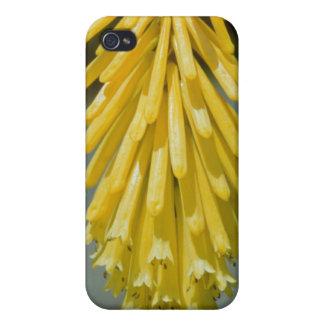 yellow Kniphofia uvaria flowers iPhone 4 Cases