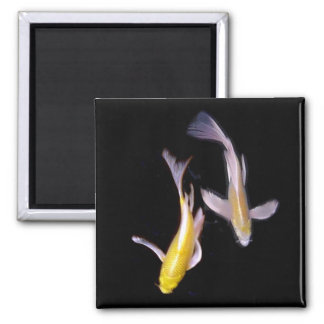 Yellow Koi Pair 2 Inch Square Magnet