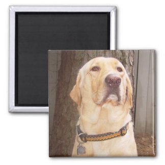 Yellow Lab 2 Inch Square Magnet