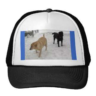 Yellow lab and black labs in the snow hats