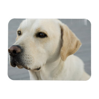 Yellow Lab Flexible Magnet Rectangle Magnet