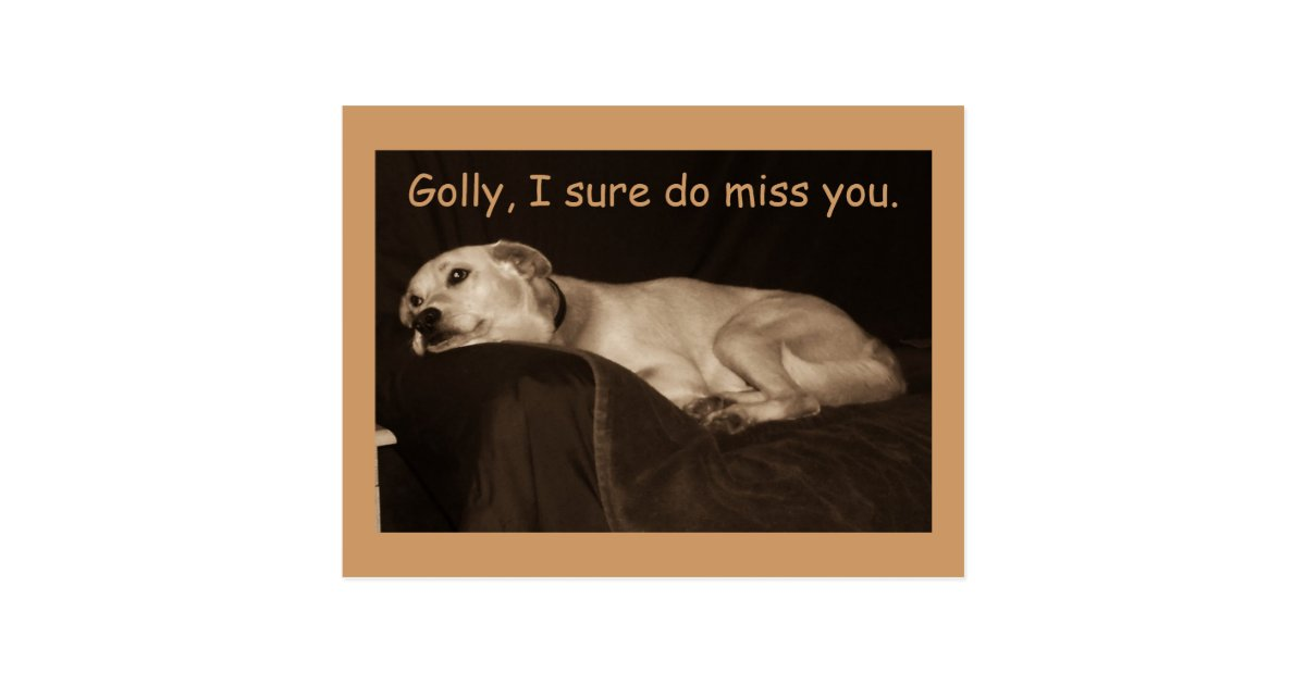 Yellow Lab Pit Husky Golly I Sure Do Miss You Postcard