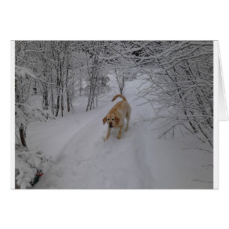 Yellow Lab Playing in Fresh Winter Snow Card