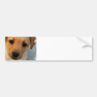 Yellow Lab Puppy Bumper Sticker Car Bumper Sticker