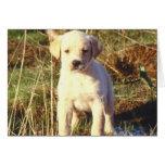 Yellow Lab Puppy Card