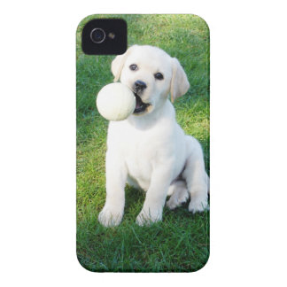 Yellow Lab Puppy iPhone 4 Case-Mate Cases