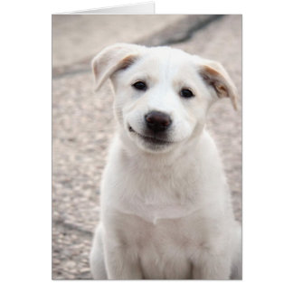 Yellow Lab Puppy - Paper Products Card