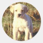 Yellow Lab Puppy Stickers