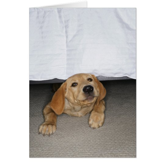 Yellow lab puppy stuck under bed card