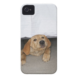 Yellow lab puppy stuck under bed iPhone 4 Case-Mate case