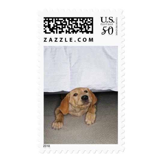 Yellow lab puppy stuck under bed postage